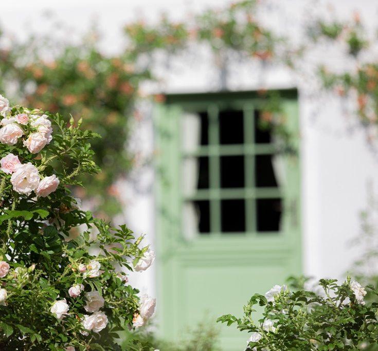 dzikie-roze-janice-ogrod-20