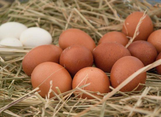 dzikie-roze-gdzie-na-zakupy-jajka